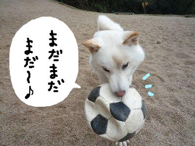 snap_nobirumaruajinikkori_20091523337.jpg