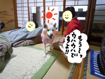 snap_nobirumaruajinikkori_200916151858.jpg