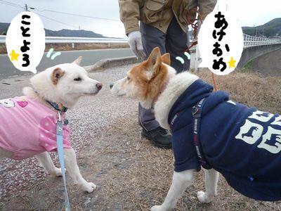 snap_nobirumaruajinikkori_200916152917.jpg