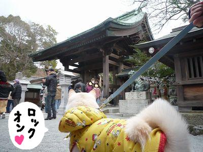 snap_nobirumaruajinikkori_200916153449.jpg