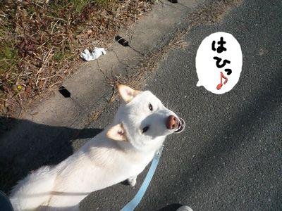 snap_nobirumaruajinikkori_200916155825.jpg