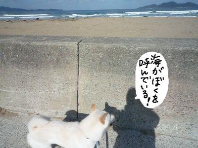 snap_nobirumaruajinikkori_200916161528.jpg