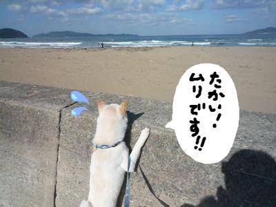 snap_nobirumaruajinikkori_200916162355.jpg