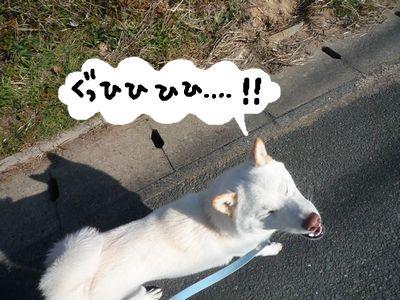 snap_nobirumaruajinikkori_20091616323.jpg