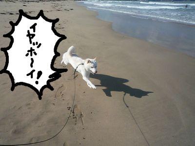 snap_nobirumaruajinikkori_200916163838.jpg