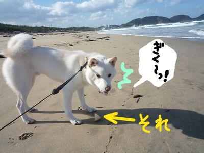 snap_nobirumaruajinikkori_200916164721.jpg