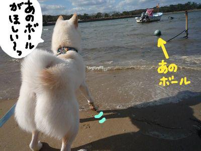 snap_nobirumaruajinikkori_200916172834.jpg