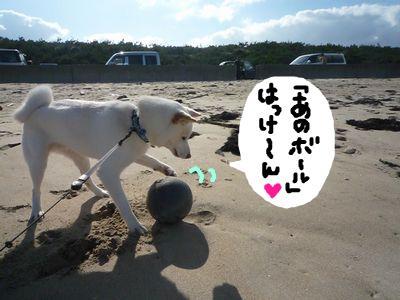 snap_nobirumaruajinikkori_200916174250.jpg