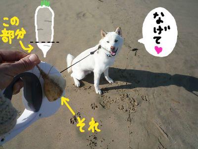 snap_nobirumaruajinikkori_20091617657.jpg