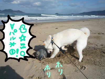 snap_nobirumaruajinikkori_20091618207.jpg