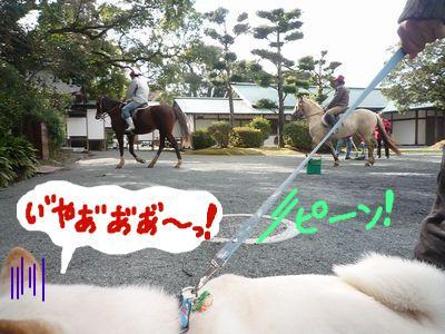 snap_nobirumaruajinikkori_200916201952.jpg
