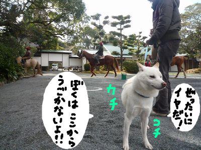 snap_nobirumaruajinikkori_200916203420.jpg