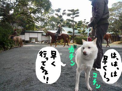 snap_nobirumaruajinikkori_20091620457.jpg