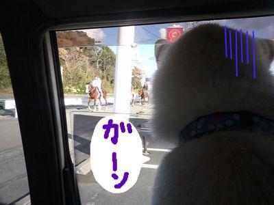 snap_nobirumaruajinikkori_200916205353.jpg
