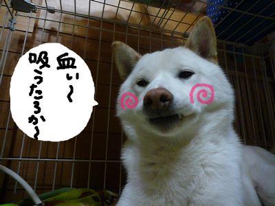 snap_nobirumaruajinikkori_20091623430.jpg