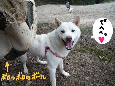 snap_nobirumaruajinikkori_200924214020.jpg