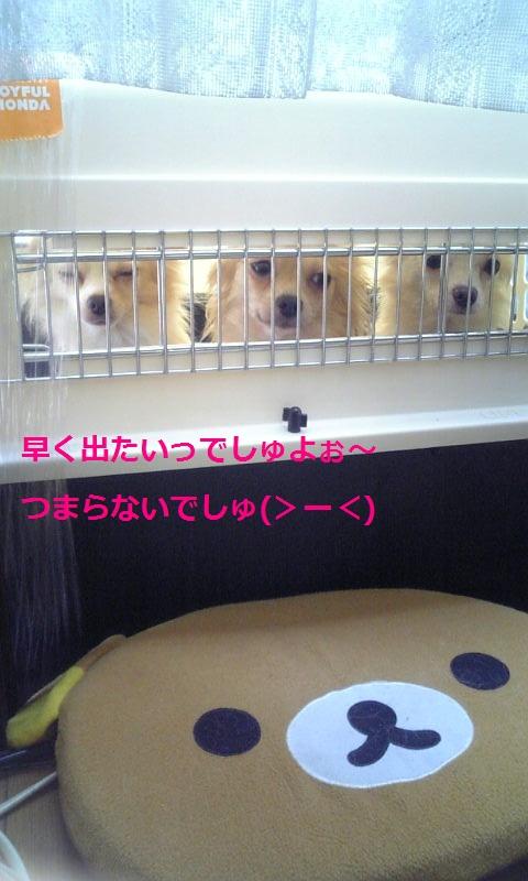 Image595.jpg