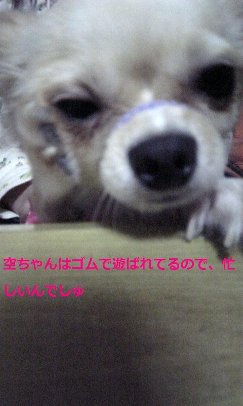 Image604.jpg