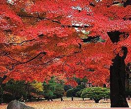 殿ヶ谷戸庭園