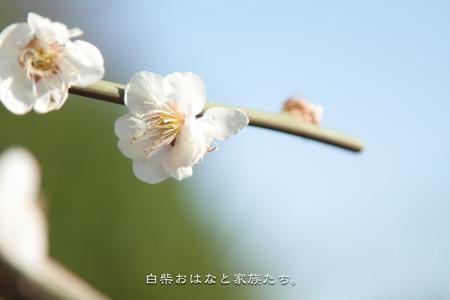 20110313-_MG_9368.jpg