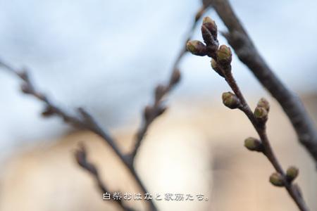 20110319-_MG_9609.jpg