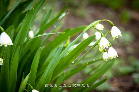 20110323-_MG_9734.jpg