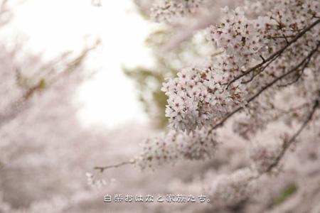 20110410-_MG_1042.jpg