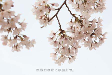 20110410-_MG_1158.jpg