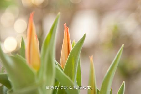 20110411-_MG_1168.jpg