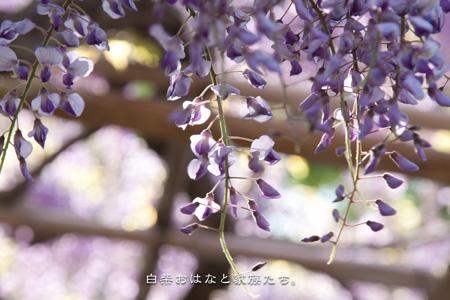 20110428-_MG_3052.jpg