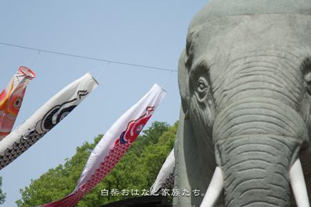20110504-_MG_3701.jpg