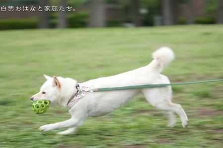 20110505-_MG_3841.jpg