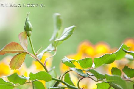 20110505-_MG_3899.jpg