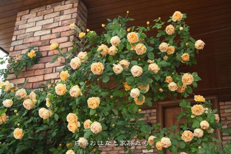 20110514-_MG_4794.jpg