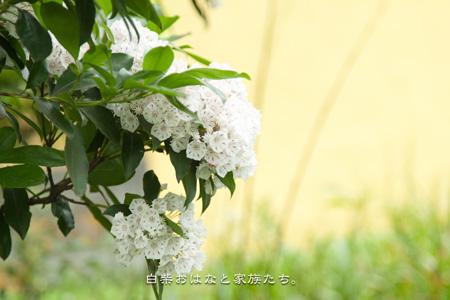 20110517-_MG_5064.jpg
