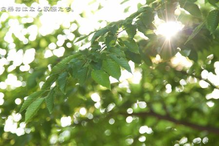 20110519-_MG_5350.jpg