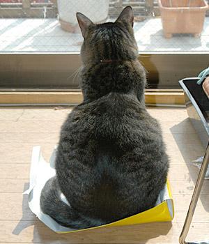 「ひよこ」の箱に入るのは無理があると思うぞ。