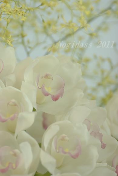 11.02.20 世界らん展 (53)