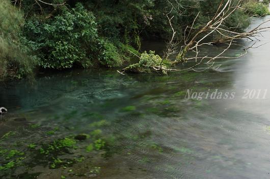 東山湖、柿田川 (24)