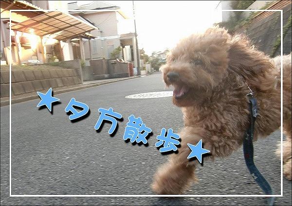 2009090510.jpg
