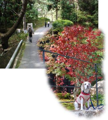 2007・11・04お多福山