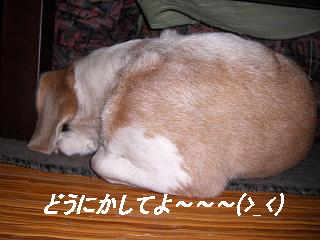 2006・08・22