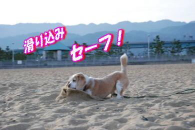 潮芦屋浜4