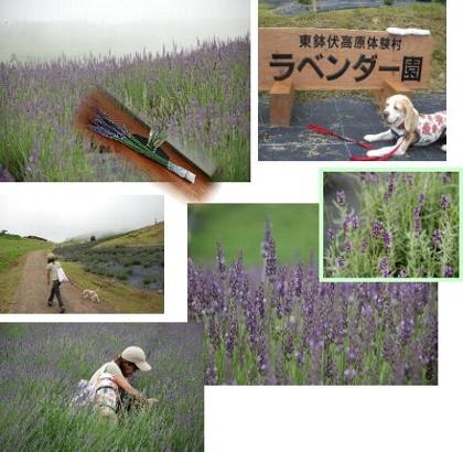 2007・07・16・