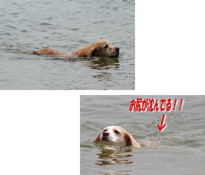 2007・08・01・琵琶湖2