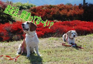 2007・10・21フィオーレ小淵沢2