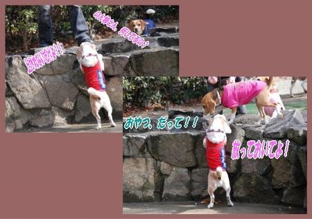2008・02・24・宝塚ガーデンフィールズ6