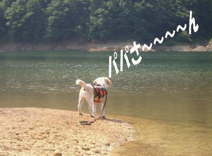 2008・08・10九頭竜湖3