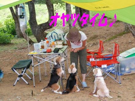 2008・08・10九頭竜湖10