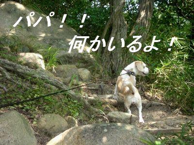 2008・09・07何かいるよ~
